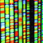 Genetic mutation causes obesity