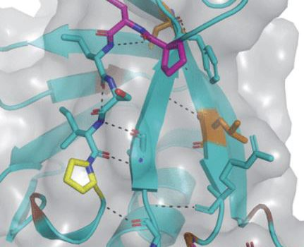 Stylised image of a protein molecule with PH domains highlighted