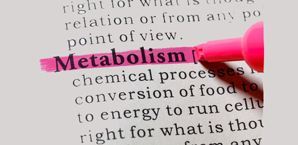 The word Metabolism is highlighted with a pen